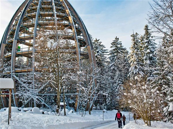 Bavaria's Enchanting Winter Forest