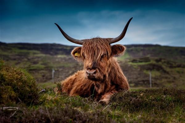 Scotland - Beautiful Bute