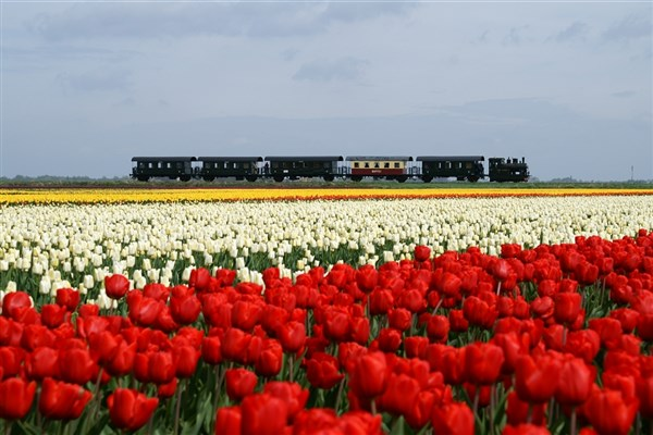 Holland - The Tulip Train