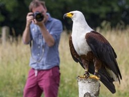 The Hawk Conservancy Trust,, Near Andover